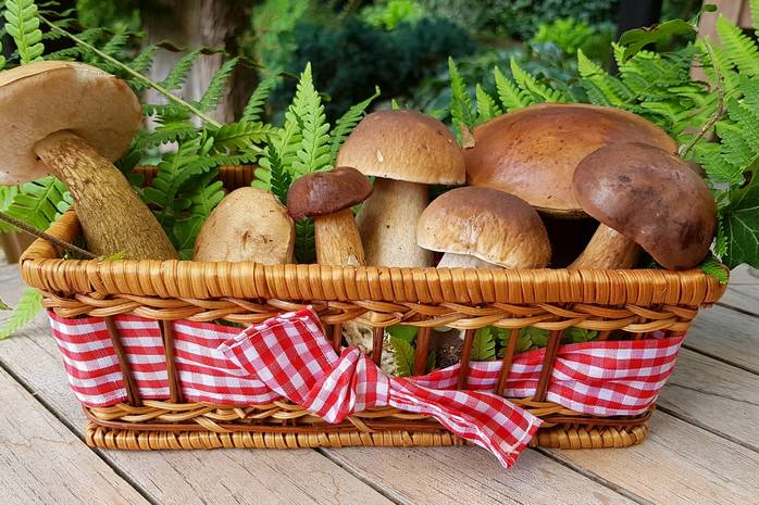 Хозяйке на заметку: как заморозить на зиму грибы