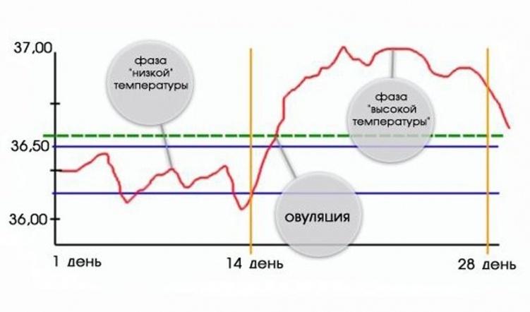 grafik_bazalynoy_temperaturyi_751x442