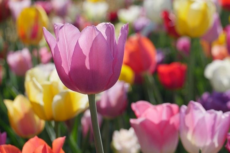 flower-3365603_1280