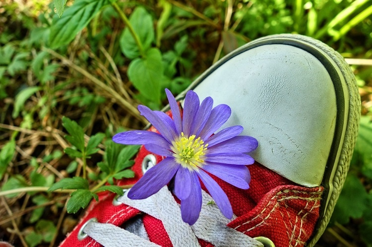 wood-anemone-3392112_1280