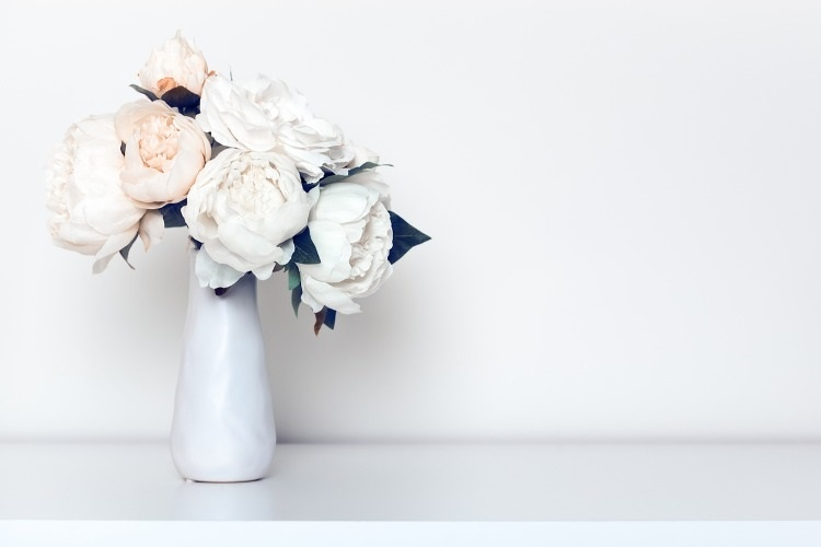 bleached-peonies-in-vase-picture-id529058602