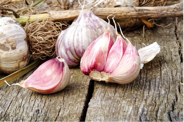 whole-garlic-with-broken-bulb-and-pink-cloves-on-rustic-wooden-board-picture-id851806088_1