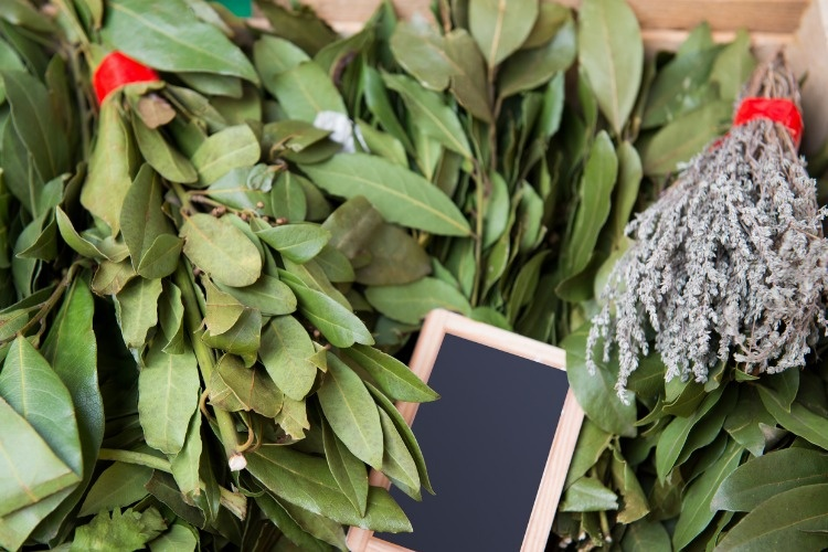 bunch-of-bay-leaf-and-thyme-picture-id466181538_01