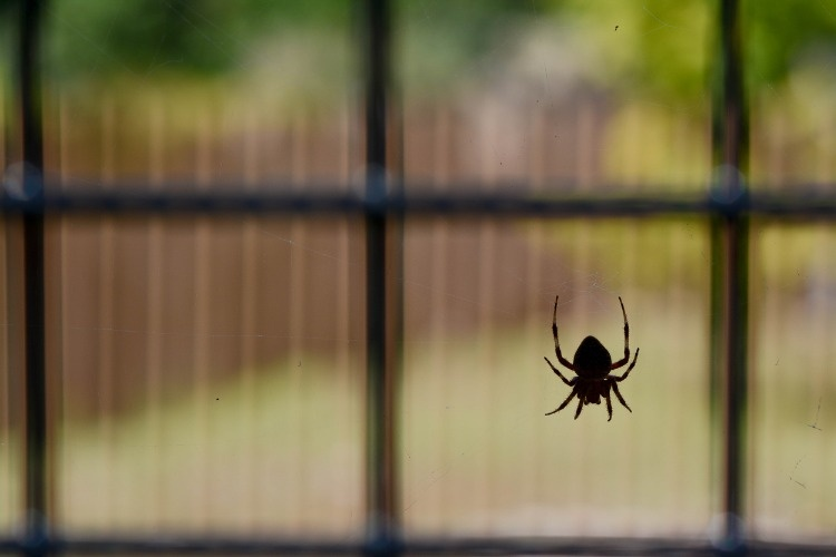 spider-picture-id476662874