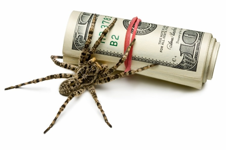 venomous-spider-stand-guard-of-cash-isolated-on-white-picture-id106589634