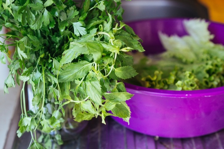 mint-and-parsley-picture-id837626468