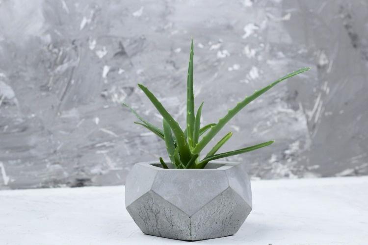 succulent-concrete-modern-pot-picture-id1017730382