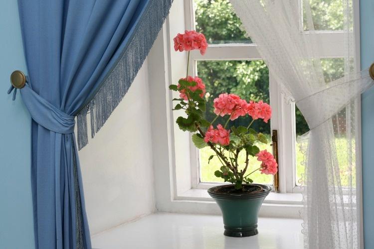 geranium-picture-id147256865
