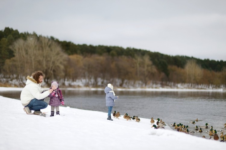 feeding-ducks-at-winter-picture-id879323240_01
