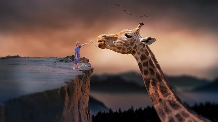 giraffe-1959110_960_720_